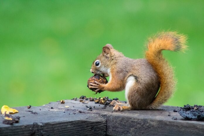 Squirrel Learning Photo by Caleb Martin on Unsplash